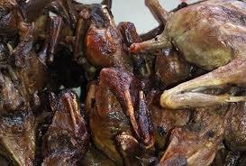 Manfaat Daging Kelelawar Bagi Kesehatan