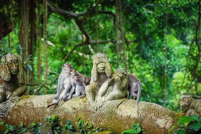 Monkey Forest : Wisata Bali dimana Monyet Berkeliaran