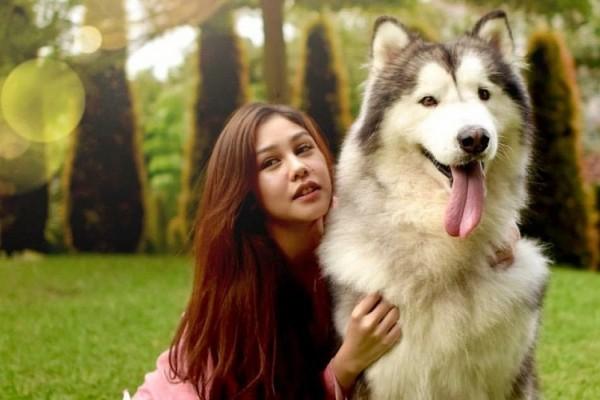 Berikut 5 Anjing yang Cocok Jadi Penjaga Rumah